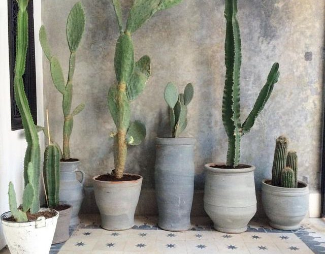 cactus vases and pottery